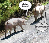 SCHWEIN Gstebuchbilder